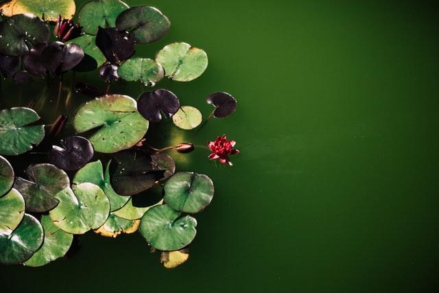 Comment éviter l'eau verte dans un bassin ?