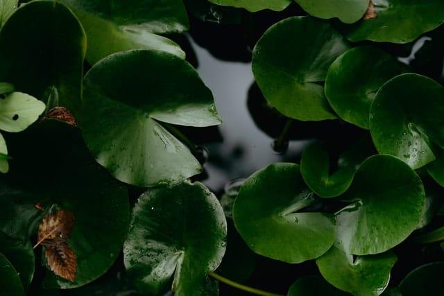 Comment cacher un filtre de bassin de jardin ?