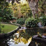 6 espèces végétales recommandées à planter autour de votre bassin